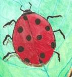 Ladybug by Rebecca Bender
