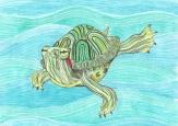 Turtle by Rebecca Bender